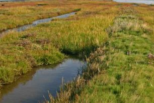 Het Mitigeren van Klimaatverandering door CO2 Compensatie in Mariene Ecosystemen, Blue Carbon